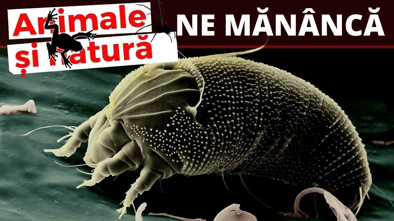 eozinofile crescute paraziti
