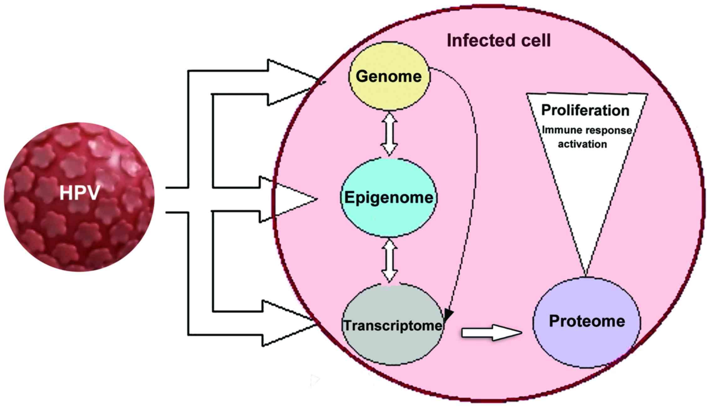 infection virale papillomavirus)