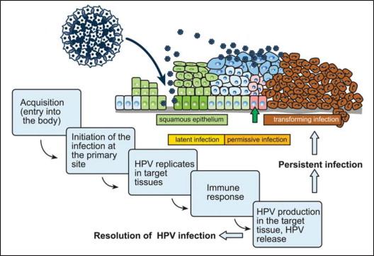 human papillomavirus infection spread by saliva)