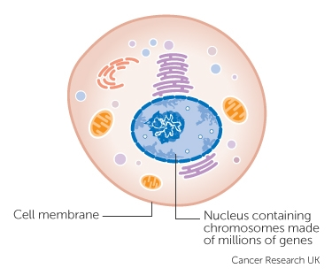 genetic cancer cells