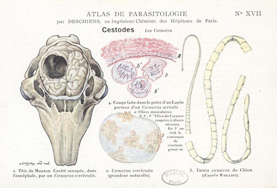 viermi și tratamente diverse