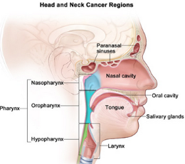 can hpv cause nasal cancer