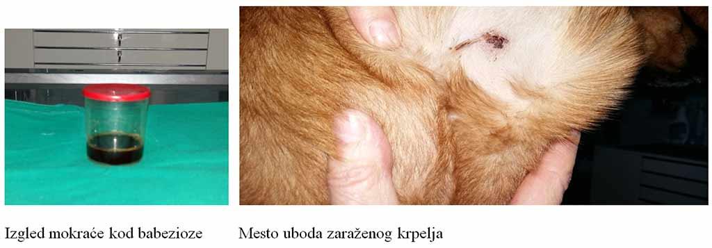 Crijevni paraziti kod pasa simptomi