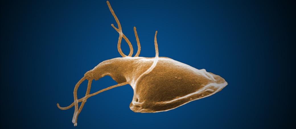 giardia parazit)