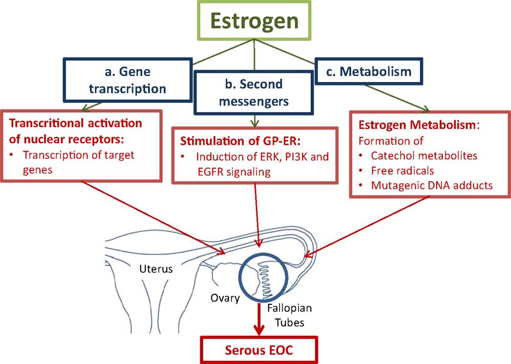 hormonal cancer ovarian