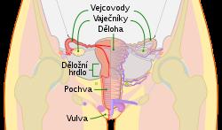 hpv virus u muzu priznaky