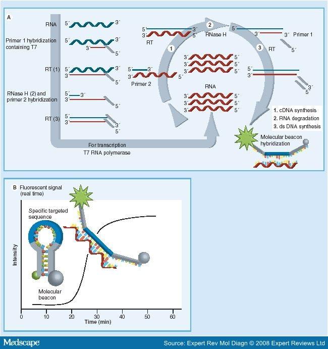 Human papillomavirus genotypes - Papilloma virus colposcopia positiva