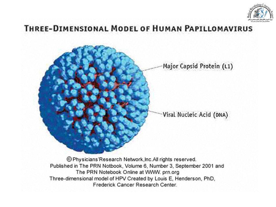 Virusul HPV, asimptomatic - Human papillomavirus infection organism