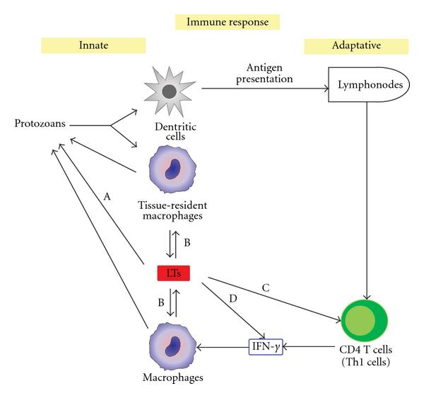 immunity against helminthic infections