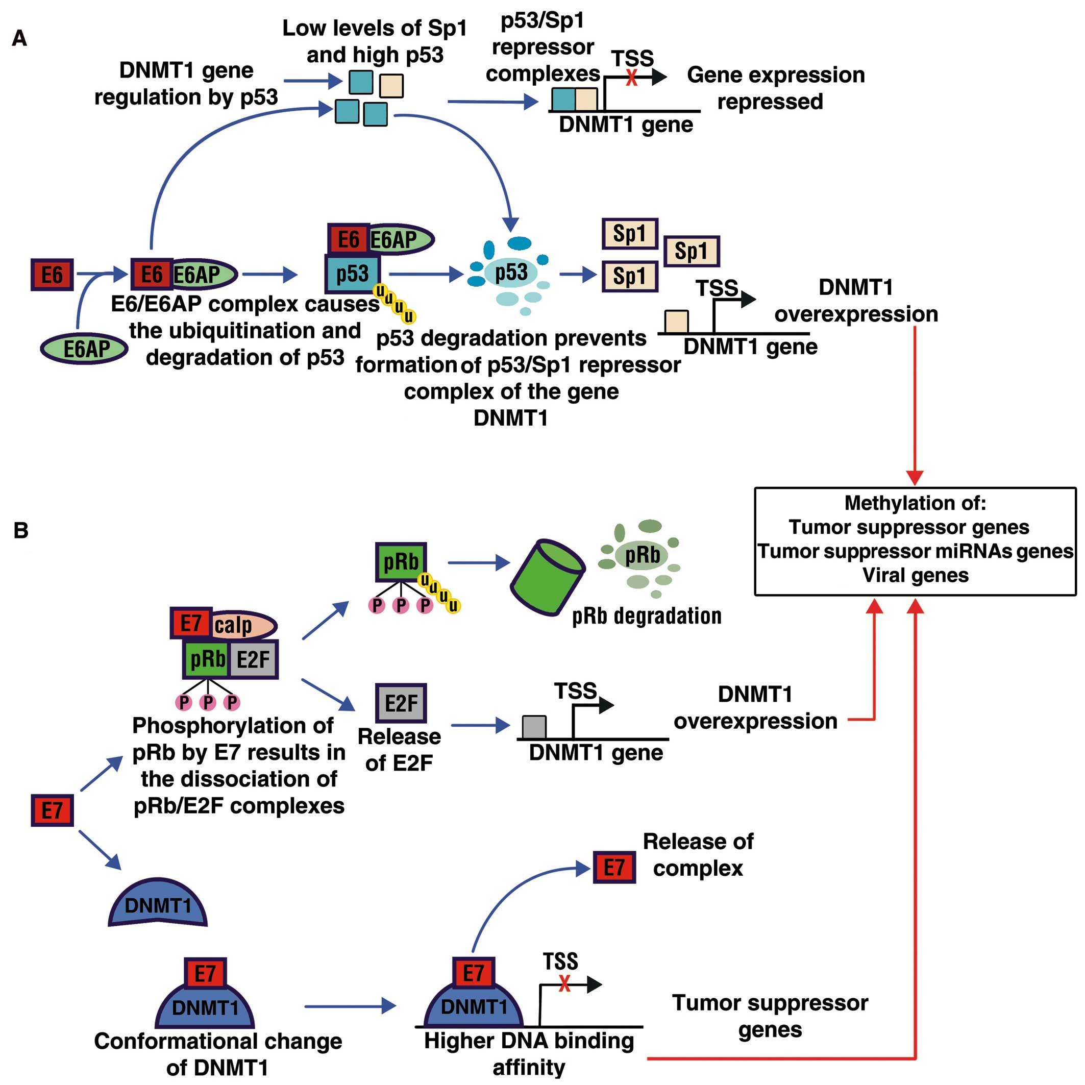 Hpv cancer genetic. HPV și cancerul de col uterin   Regina Maria
