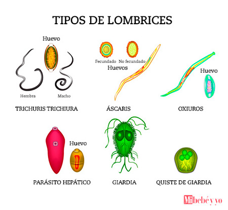 lombrices ninos