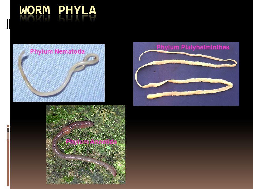 Diferența dintre nematode și cestode