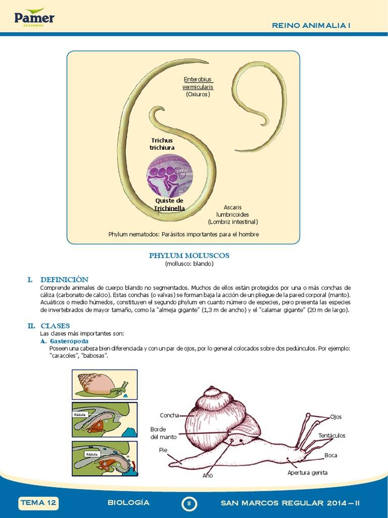 Que es oxiuros en biologia
