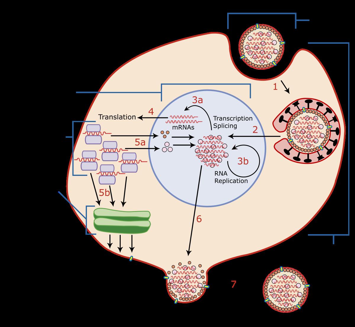 pancreatic cancer survival cancer epitelial de prostata
