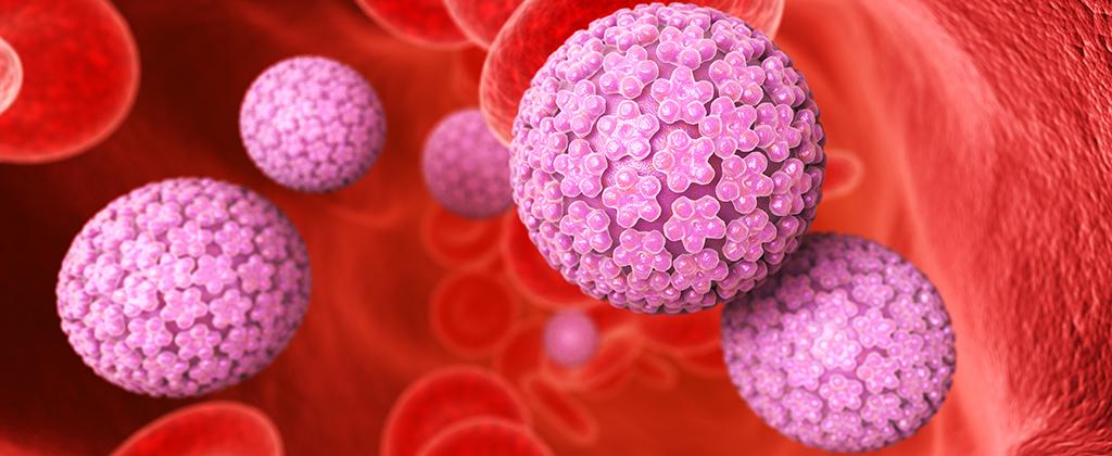 papilloma virus uomo va via da solo clasifică nemathelminthes hewan