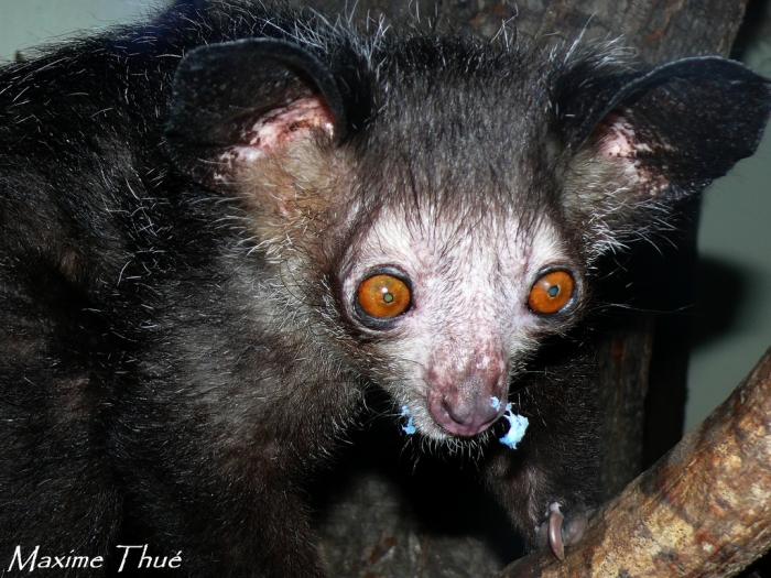 Cele mai groaznice animale din lume. Animale ciudate și rare (61 de fotografii)