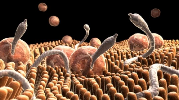 paraziți vermini crescător de viermi