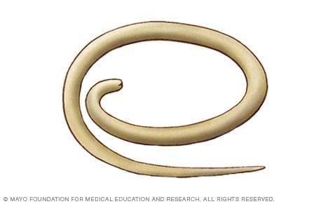 Que son parasitos oxiuros. HELMIFLORES giardia 30ml FARMACIA VERDE
