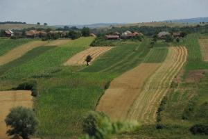 Producătorii de ciuperci vor avea subvenție de 100.000 de euro