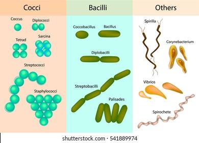 toxoplasma negativa in sarcina