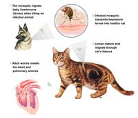 wart virus in humans warts mouth symptoms
