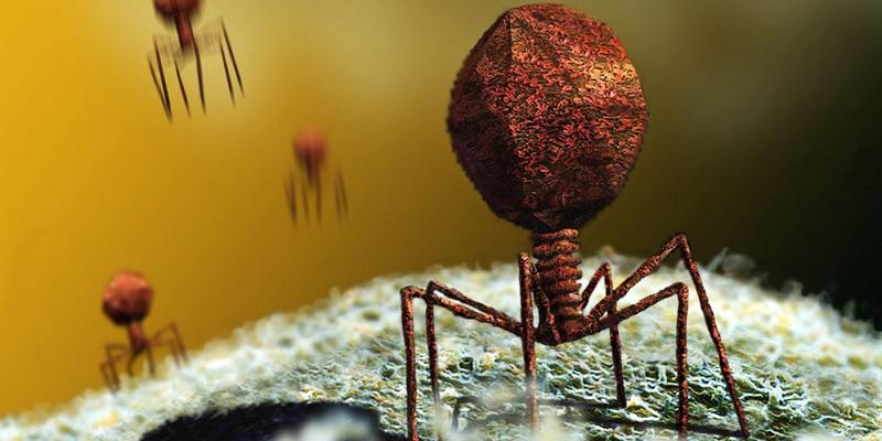 virusi si bacterii