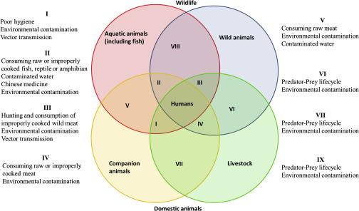 oxiuros( cinta de graham) vaccino papilloma virus anche per maschi