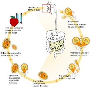 epidemiologia giardiozei