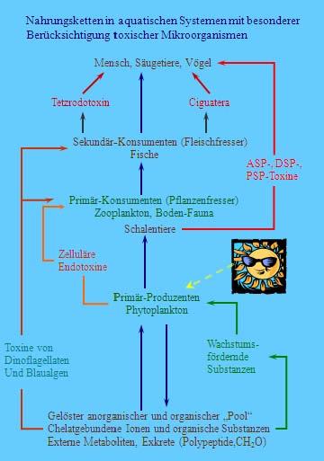 Zecken toxine, (Behandlung - Rumänisch Übersetzung - Deutsch Beispiele | Reverso Context