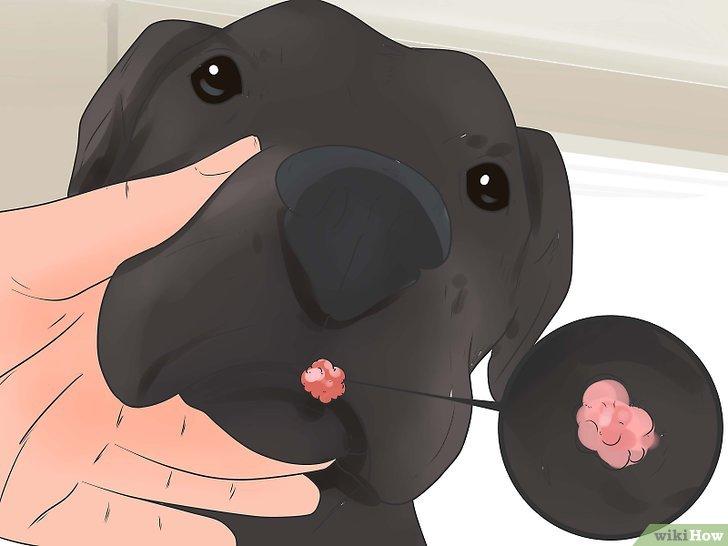 papilloma virus dei cani