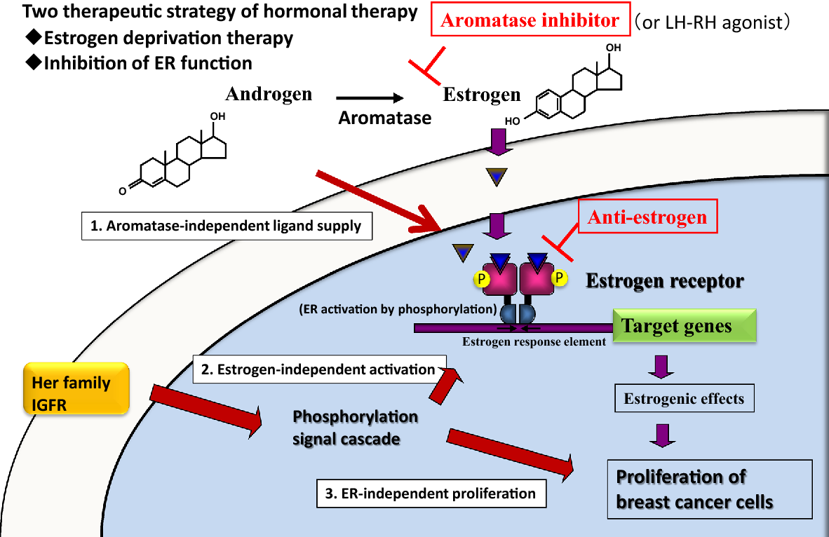 cancer hormonal agents