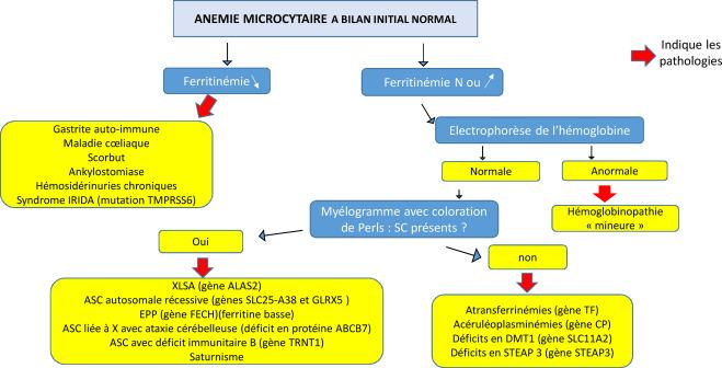 anemie diagnostic hpv warts black