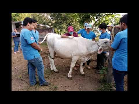 papilomatosis bovina es zoonotica
