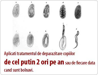 vierme rotunde în plămâni)