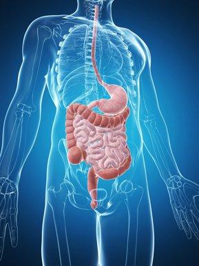 platyhelminthes tipul sistemului digestiv cancer colon t3