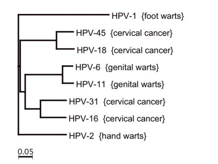 human papilloma virus strains)