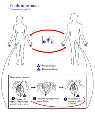 human papillomavirus in swahili