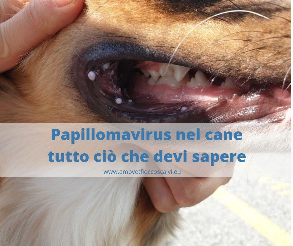 papilloma virus occhio cane)