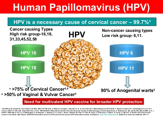 human papillomavirus 16
