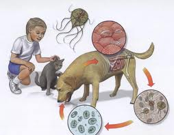 alergie la giardioza copilăriei