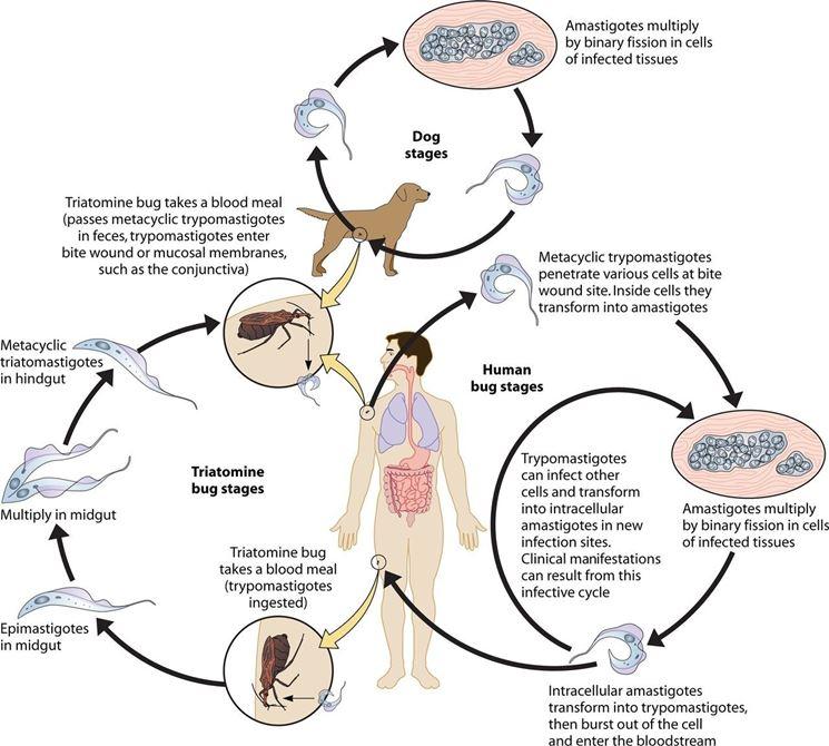 Farmaci per papilloma virus uomo