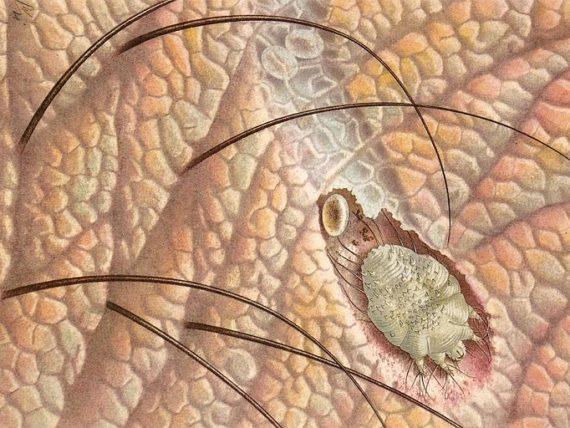 helminths tratament la simptome la om hpv vaccine side effects long term