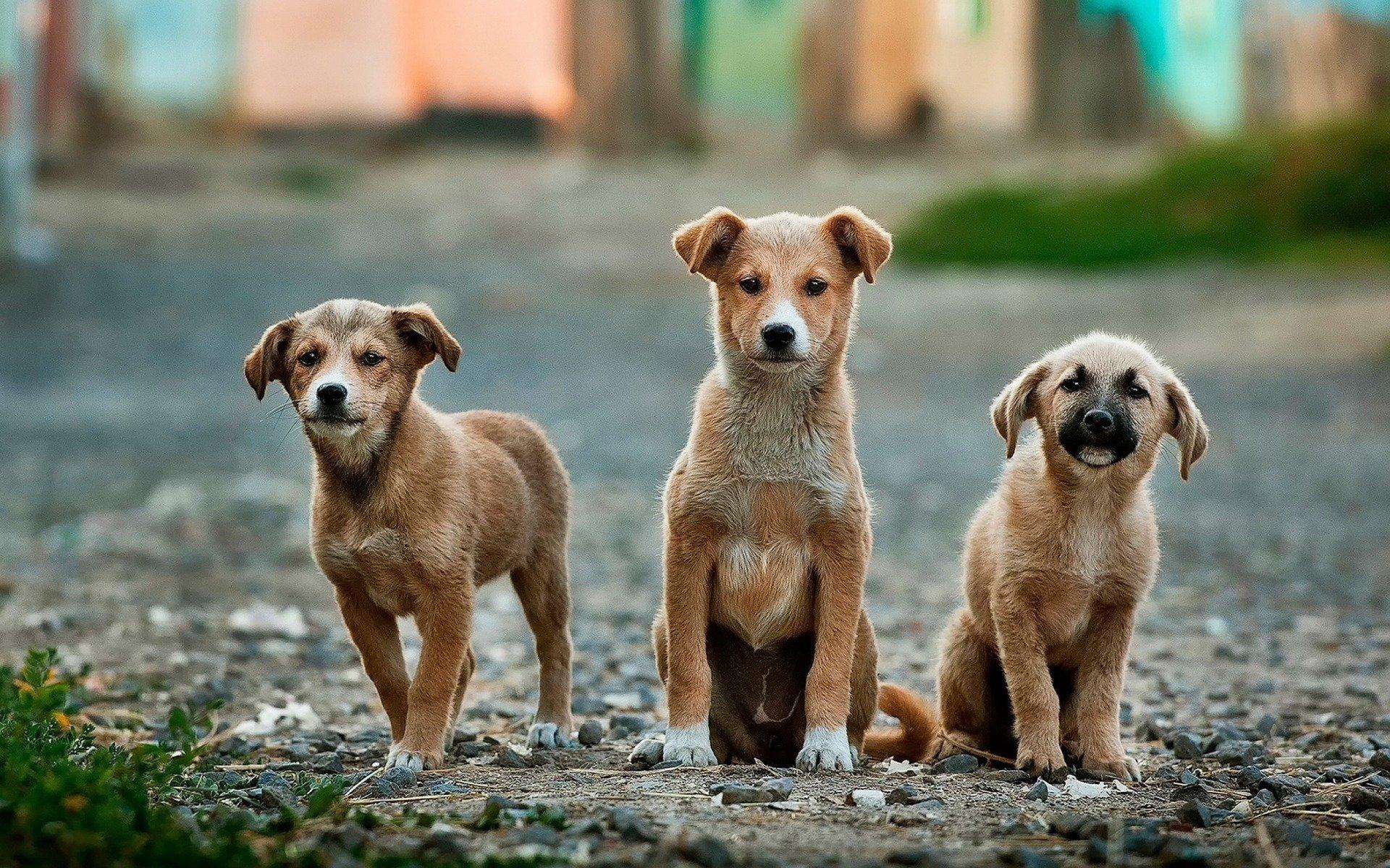 giardia nel cane quanto dura)
