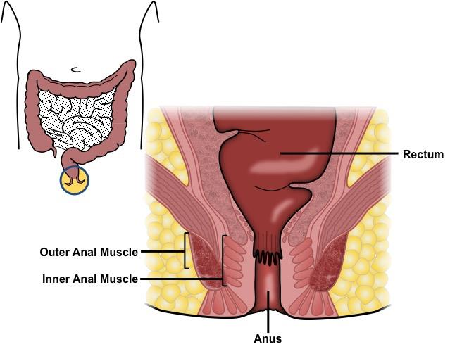 Rectal cancer lump, Much more than documents.