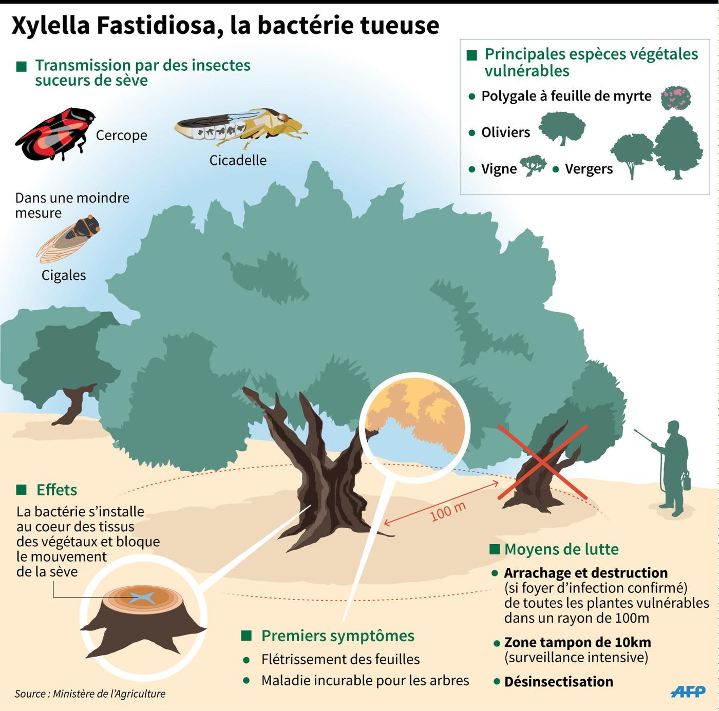 bacterie xylella fastidiosa