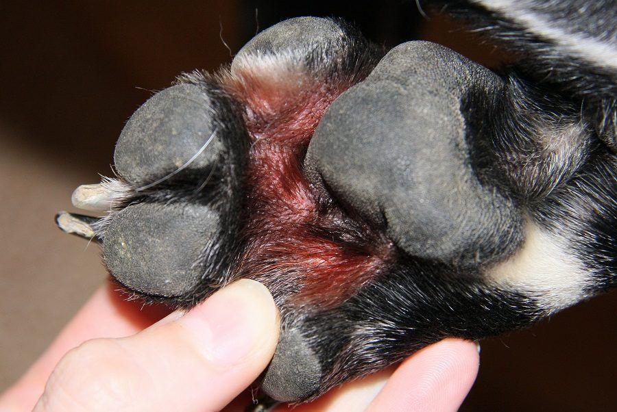 Dermatite zampe cane rimedi naturali. Cancer de colon plan de ingrijire