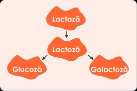 intoleranță la lactoză cauzată de paraziți