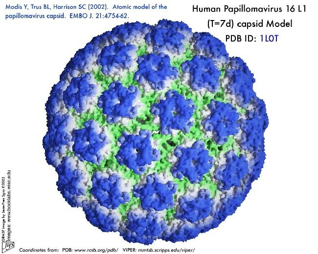 Is hpv caused by a virus or bacteria