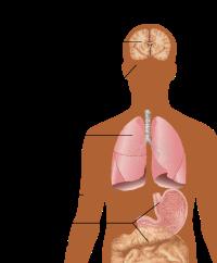 simptomele unui parazit larg