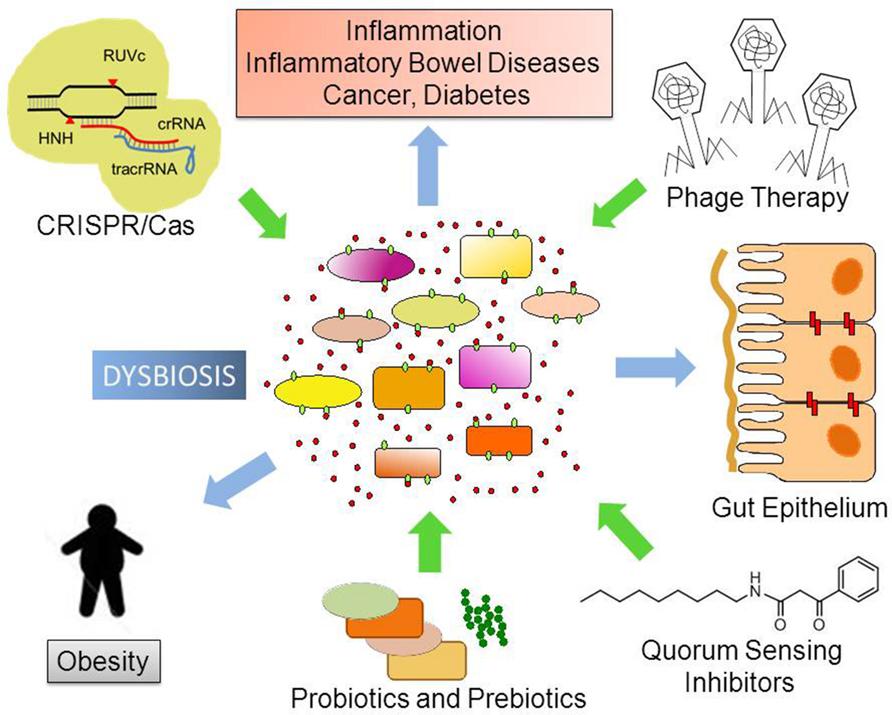 Dieta pentru tratamentul dysbiosis intestinale, Dysbiosis of the microbiome